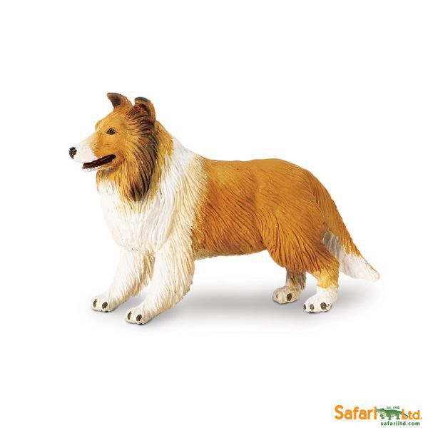 239329 collie (safari)