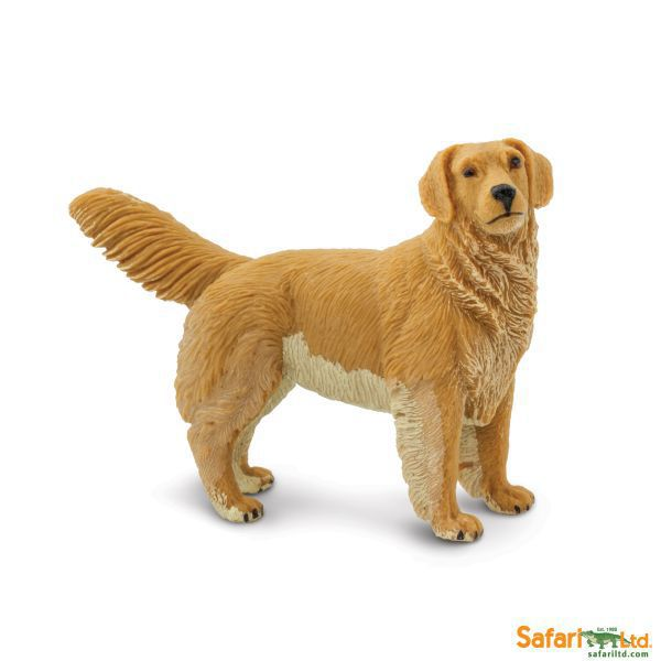 253129 golden retriever (safari)