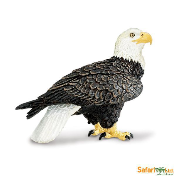 291129  aguila real (safari)