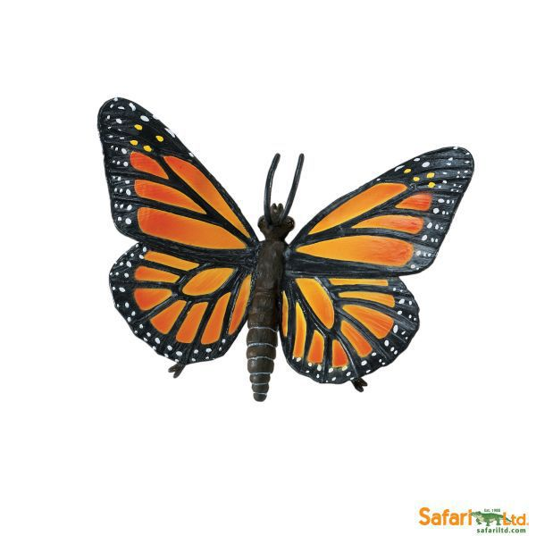 542406 mariposa monarch (safari)